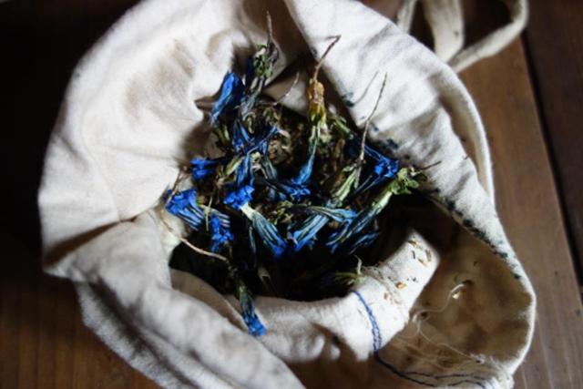 薬師の家に保管されていたヒマーラヤの薬草(リンドウ科、2015年撮影)